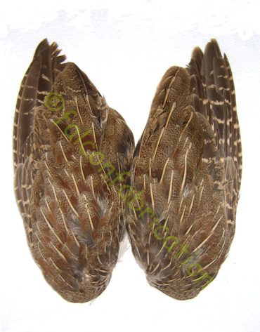 english_partridge_wings