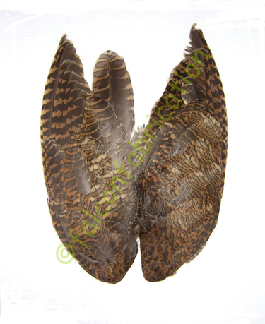 woodcock_wings
